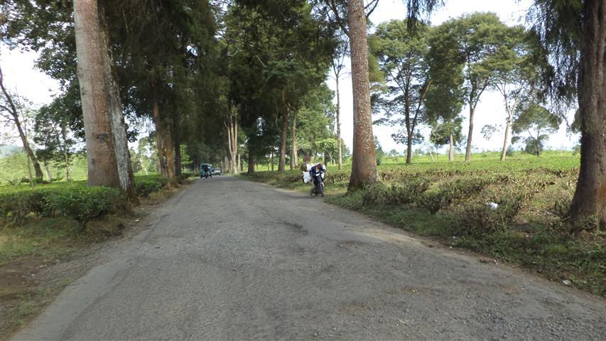 Jalan masuk kebun teh pengalengan